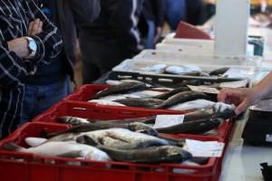 Uz tunu, hrvatska orada i brancin sve traženije delicije u EU
