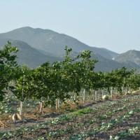 Više od 500 poljoprivrednika moglo bi ostati bez zemljišta koje obrađuju od 1997.?