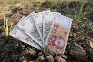 Javlja i Ministarstvo: isplata prve rate izravnih plaćanja i IAKS mjera kreće u ponedjeljak!