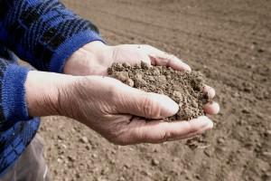 Čekaju nas zbog suše veliki gubici na ječmu, stradat će i druge kulture