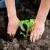 Maj je mesec sadnje rasada - smanjimo stres presađivanja