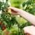 Pro-bac - revolucionarni preparat s kojim biljke ostaju zdrave