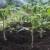 Kako huminske kiseline pomažu povećati sadržaj humusa u tlu