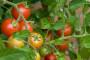 Biovega - zagovornik zdravog života