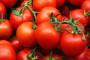 Plants Protector Thiofer u proizvodnji presadnica povrća