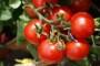 Prekomjerna potrošnja gnojiva stajat će nas poljoprivrednih potpora