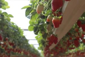 Zašto su razmišljanja o rajonizaciji poljoprivrede zastarjela?
