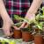 Mjere u zaštiti rasade povrća i cvijeća