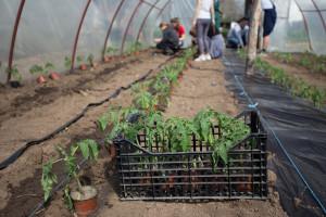 Muzičari koji uzgajaju povrće i cveće