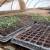 Plastenički uzgoj povrća isplativ, samo treba ispoštovati sve potrebne mjere