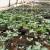 Kako izgleda tradicija povrtarskog uzgoja sa savremenim metodama?