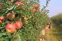 U BiH raste proizvodnja voća, povrća i žitarica
