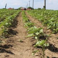 Ministarstvu poljoprivrede rebalansom proračuna dodatnih 838 milijuna kuna