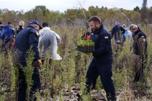 U dva dana na opožarenom predjelu Kožina posadili 10.000 stabala