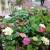 Uzgoj začinskog i ukrasnog bilja: Mnogo ljubavi, malo ulaganja i dobra zarada