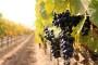Boom poljoprivrednog razvoja u Polači