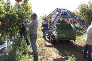 REVO PIUMA 4WD beračima olakšava berbu i transport voća