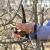 Prijavite se na besplatnu Zimsku školu rezidbe vinove loze i voćnjaka!