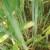 S Pro-bacom biljke ostaju zdrave, otpornije na stres i nepovoljne uvjete