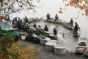 Preventivnim delovanjem protiv trovanja ribe