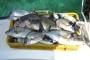 Košta li nas više riba ili ribarska politika?