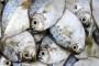 Otrovana riba u Spreči, treći puta ove godine