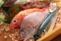 Pravila za ekološku proizvodnju u akvakulturi