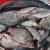 Javni natječaj za dodjelu povlastica za gospodarski ribolov na rijekama Savi i Dunav