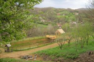 Proizvodnja ribe - profitabilna delatnost u Srbiji za koju nema interesovanja