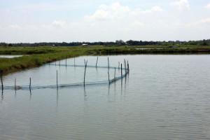 Mnogo prostora za napredak ribarstva