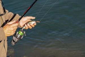 Objavljen javni konkurs o korišćenju ribolovni područja
