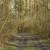 Javno savjetovanje: Pravilnik o korištenju sredstava naknade općekorisnih funkcija šuma