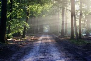Izdavanje suglasnosti za prijavu projekata na šumskom zemljištu na natječaje iz fondova EU