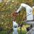 Robotu treba 11 sekundi da ubere jabuku - jednako kao čovjeku?