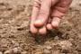 Kako provjeriti klijavost sjemena?