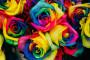 Ruže duginih boja - u čemu je tajna?