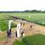 RWA pšenice pobijedile u pokusu kombinata Kutjevo