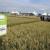 RWA sorte pšenice i u ovoj nepovoljnoj godini ostvarile odlične rezultate