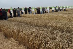 Prvih 20 godina RWA u Hrvatskoj uz  nove sorte i novi tim:  otkupit ćemo više od 125.000 tona žitarica i uljarica!