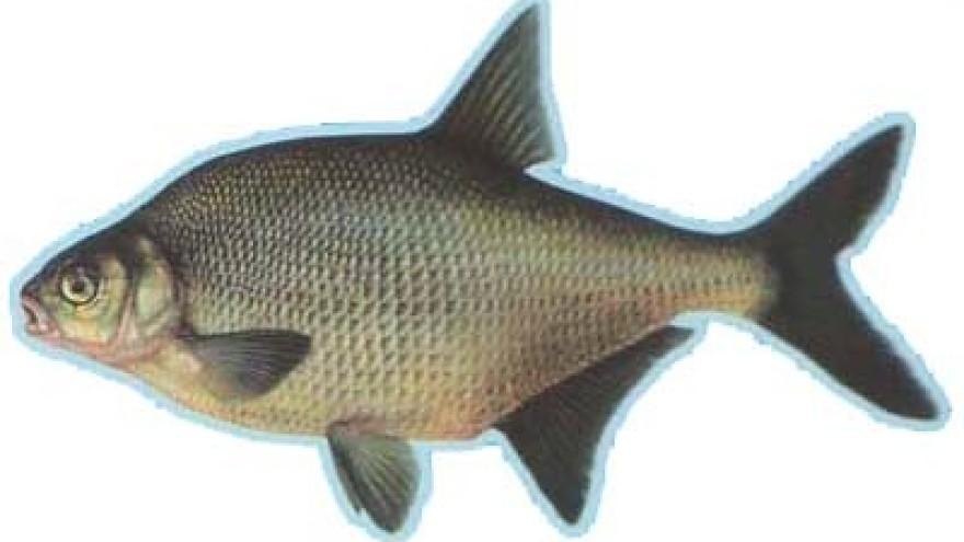 Obilje ribe za prijavu