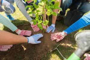 Utvrđen Nacrt zakona o reprodukcionom materijalu šumskog i ukrasnog drveća i grmlja