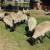 Ovčarstvo - genetikom do vrhunskih proizvodnih rezultata