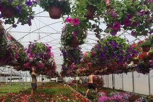 Međunarodni sajam hortikulture u Beogradu