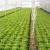Dupla folija i naduvavanje zraka između najlona za zimsku zaštitu zelene salate