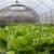 Bolesti salate: Plodored i karenca kao najvažnije preventivne mjere