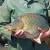 Potražnja za ribom smanjena za 50 odsto zbog pandemije