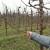 Trešnja trenutno ekonomski najisplativija voćna vrsta u Srbiji?