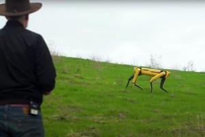 Pas robot: Nadgleda useve i čuva ovce?