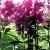 Šeboj cveće po prozoru se razmeće