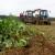 Poljoprivrednici iz sektora biljne proizvodnje - ostvarite bespovratne potpore!